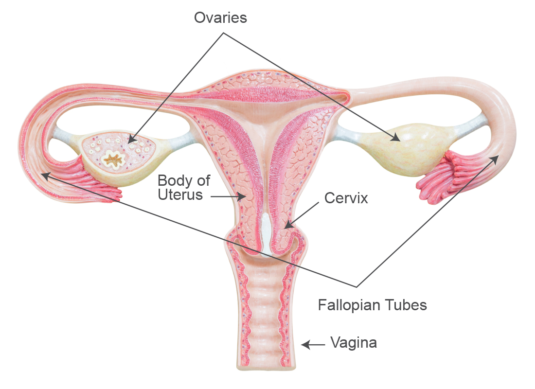 Hereditary Uterine Cancer