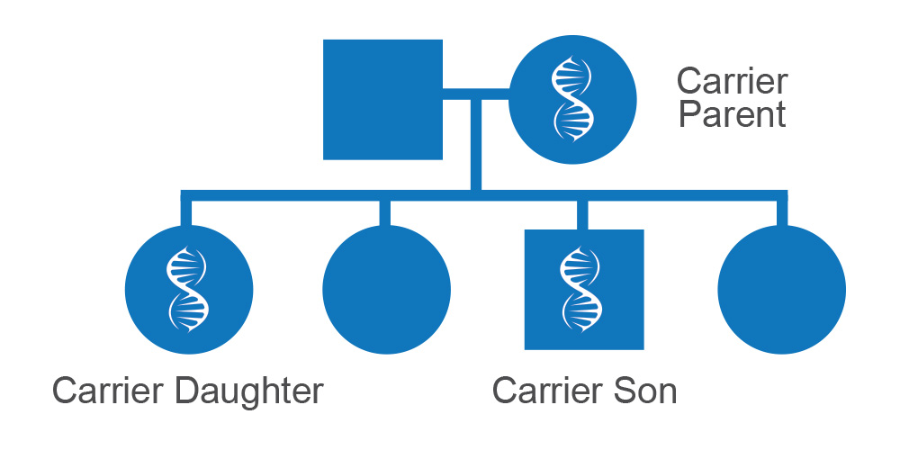 Graphic depicting how gene mutations are inherited